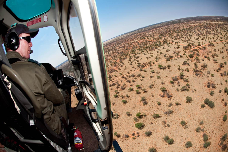 Mokala - Game Capture Story (Northern Cape)